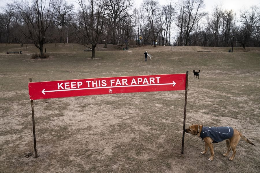 Harvest, a longtime reveler to Prospect Park's Long Meadow, sniffs a social distancing sign as he plays off-leash during designated free-roaming hours in New York.