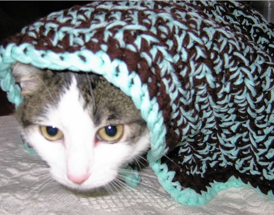 Anna at the DuPage Animal Control Shelter in Wheaton gets all cozy with her blanket from Comfort for Critters.