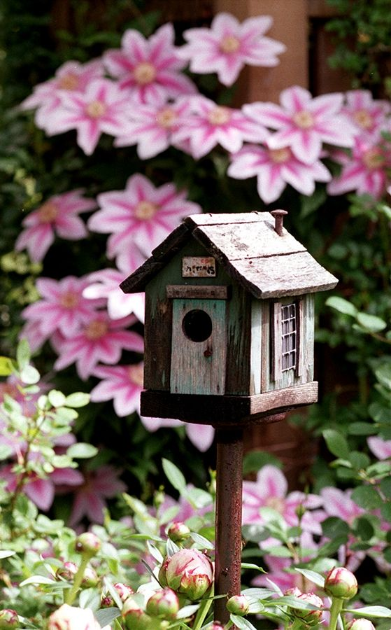 Lisa Maier of the McHenry County Audubon Society will offer tips to attract birds to your garden.