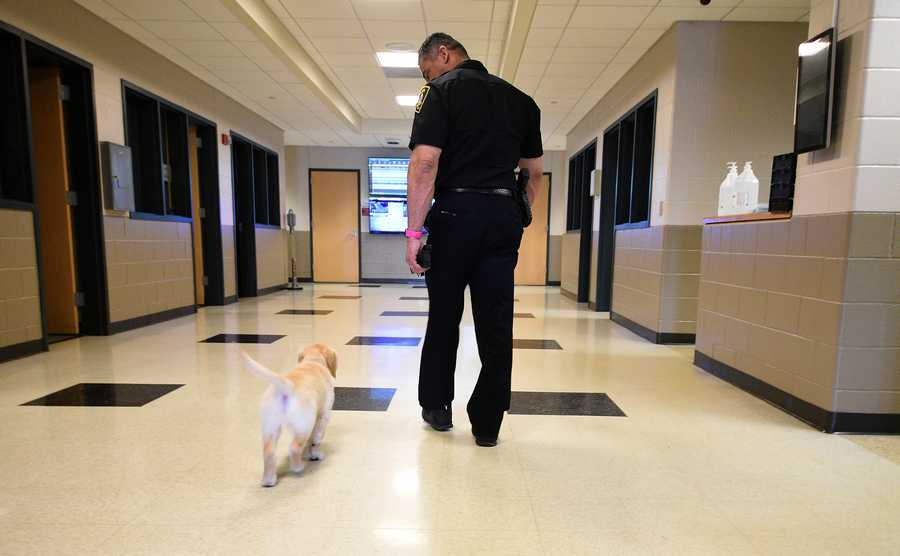 Elgin Police Commander Eric Echeverria walks through the halls with Chance, the department's new comfort dog.