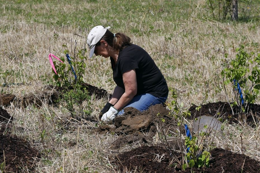 Some Earth Day events incorporate restoration and planting activities.