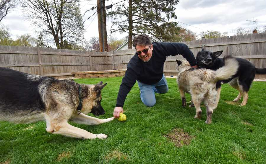 Palatine resident Jason Sassorossi has a petition signed by 300 people for a dog park at Deer Grove Forest Preserve in Palatine. He has three dogs. Achilles, left, and Hector, right, are German shepherds and Luke is a Norwegian elkhound.