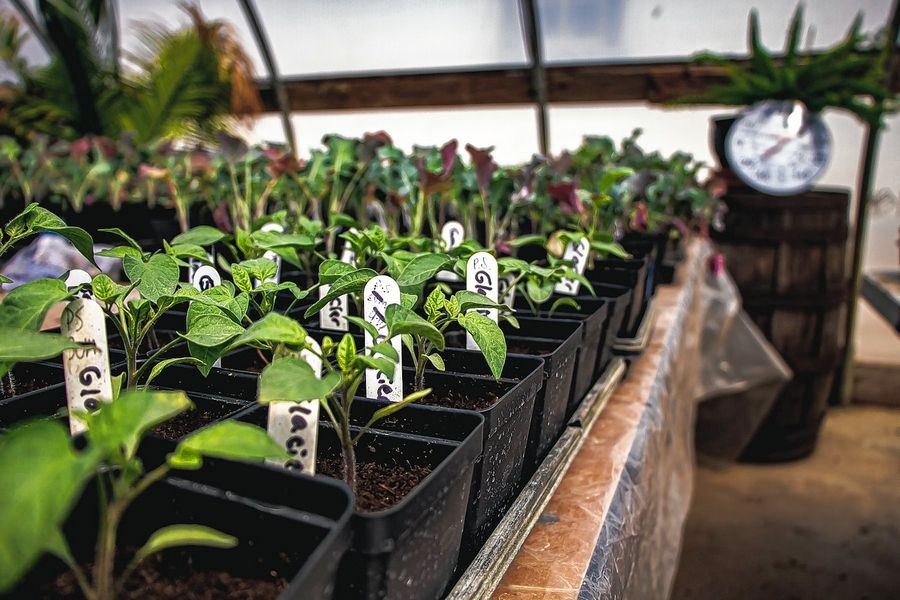 Herbs, tomatoes, peppers and more will be featured at Heritage Prairie Farms' Organic Transplant Sale starting Saturday, April 24.