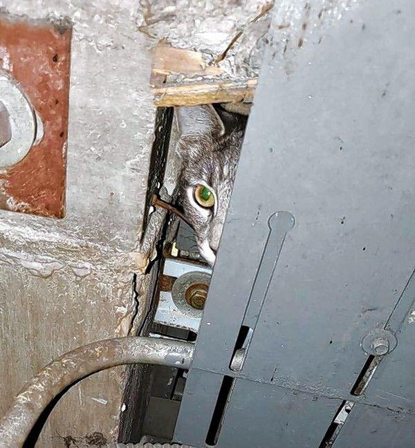 Elevator Mechanic Rescues Cat