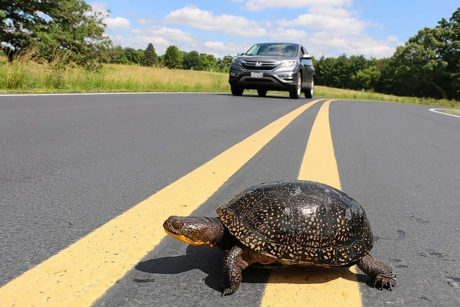 Some turtles must travel up to a mile to find the right conditions for nesting.