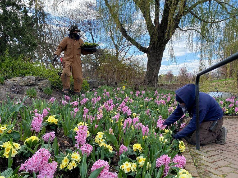 Chicago Botanic Garden staff are busy getting flower beds ready for spring.