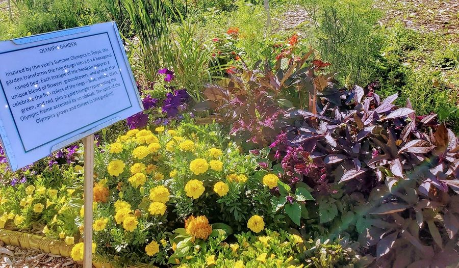 """A die """"Gardens of ideas"""" draws inspiration from the Summer Olympics, using a ring design in a 6ft by 6ft hexagonal raised bed."""
