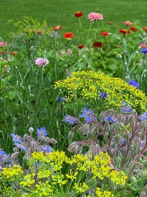 """Learn about native species from the Kane County Master Gardener """"Gardens of ideas"""" off Route 38 in Saint-Charles."""