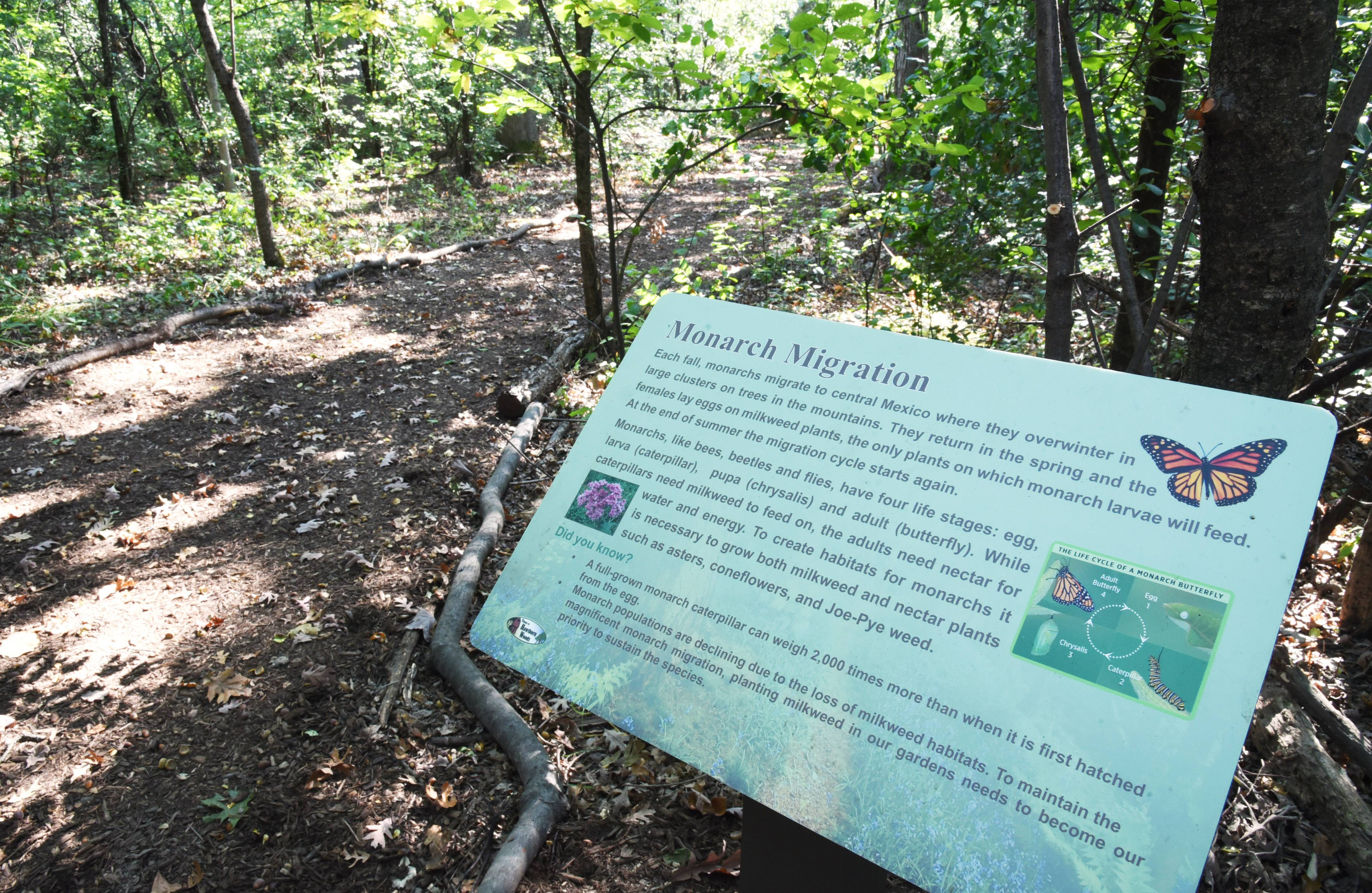Facts about monarch butterflies are posted along of the Brierwoods Preserve trails in Hawthorn Woods.
