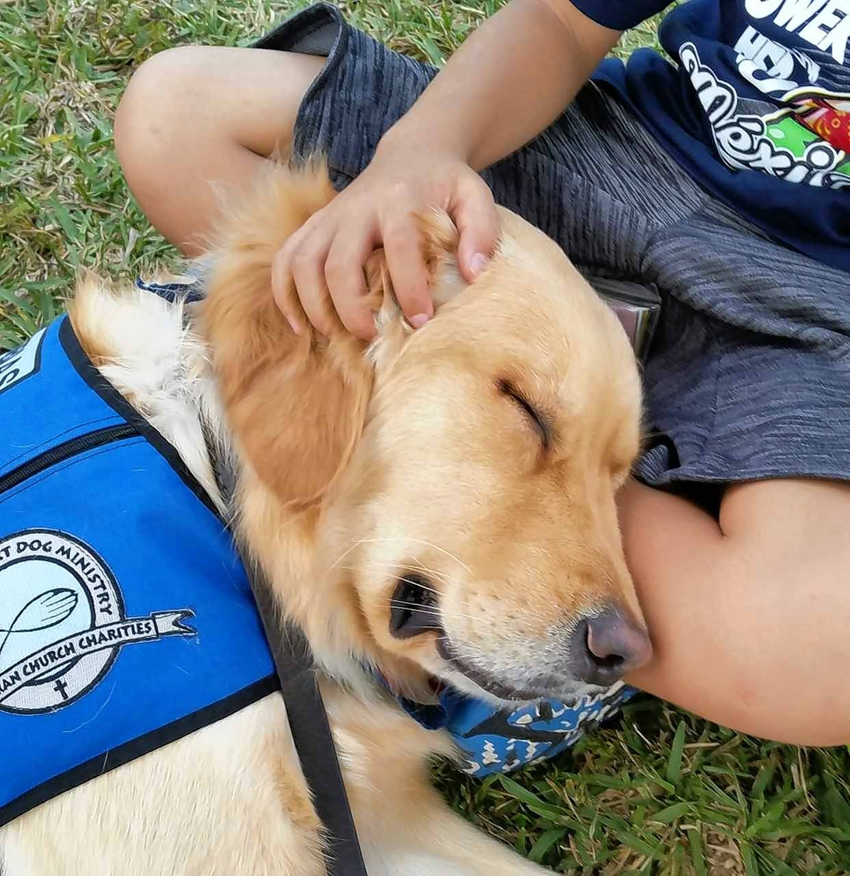 A dog from Lutheran Church Charities K-9 Ministry comforts a child in Parkland, Florida.