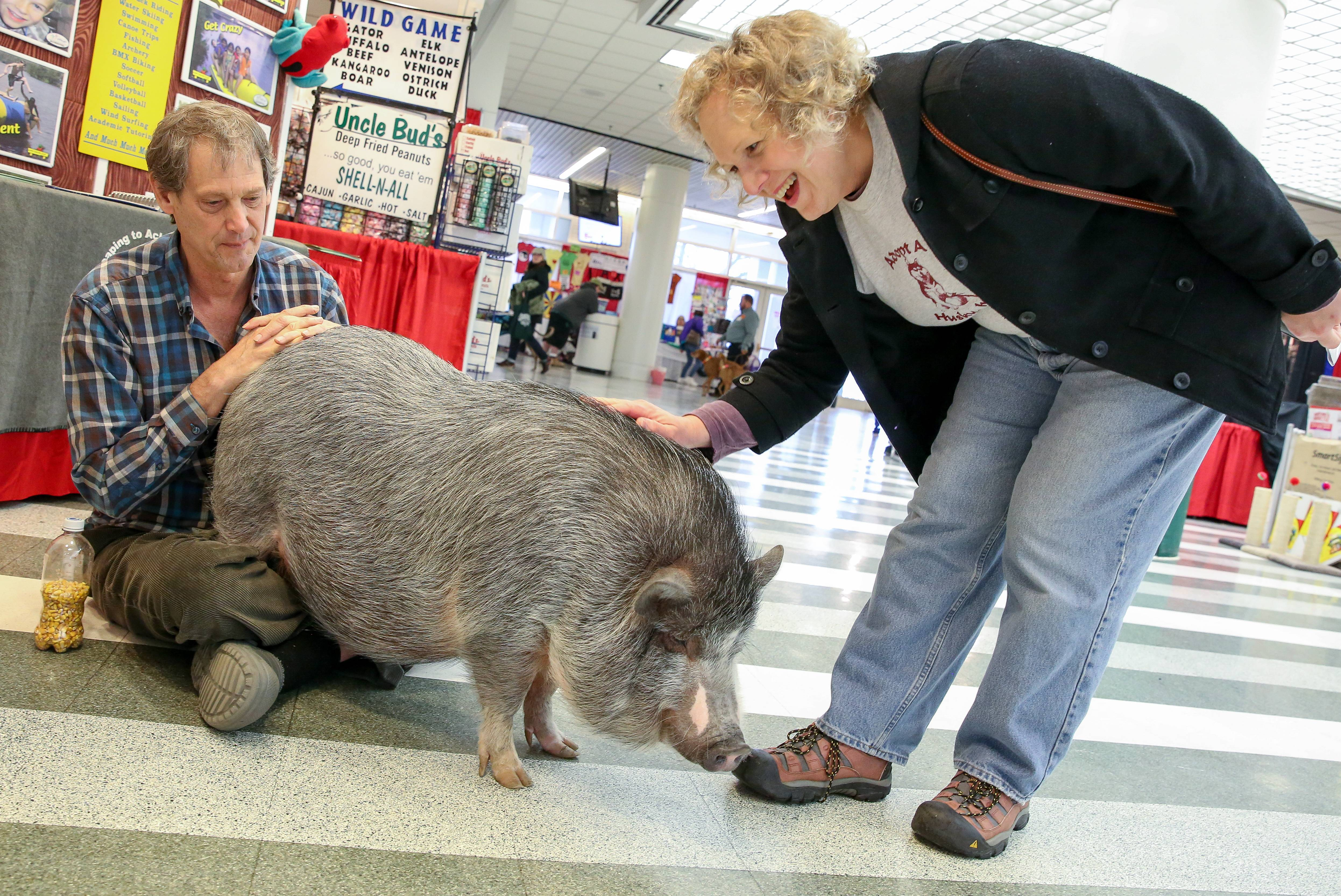 Rebecca Tulloch of Bartlett greets Bubba, a Juliana pig, with Jeff Lorenz of Swift Nature Camp in Wisconsin at the Chicagoland Family Pet Expo at Arlington Park in Arlington Heights.