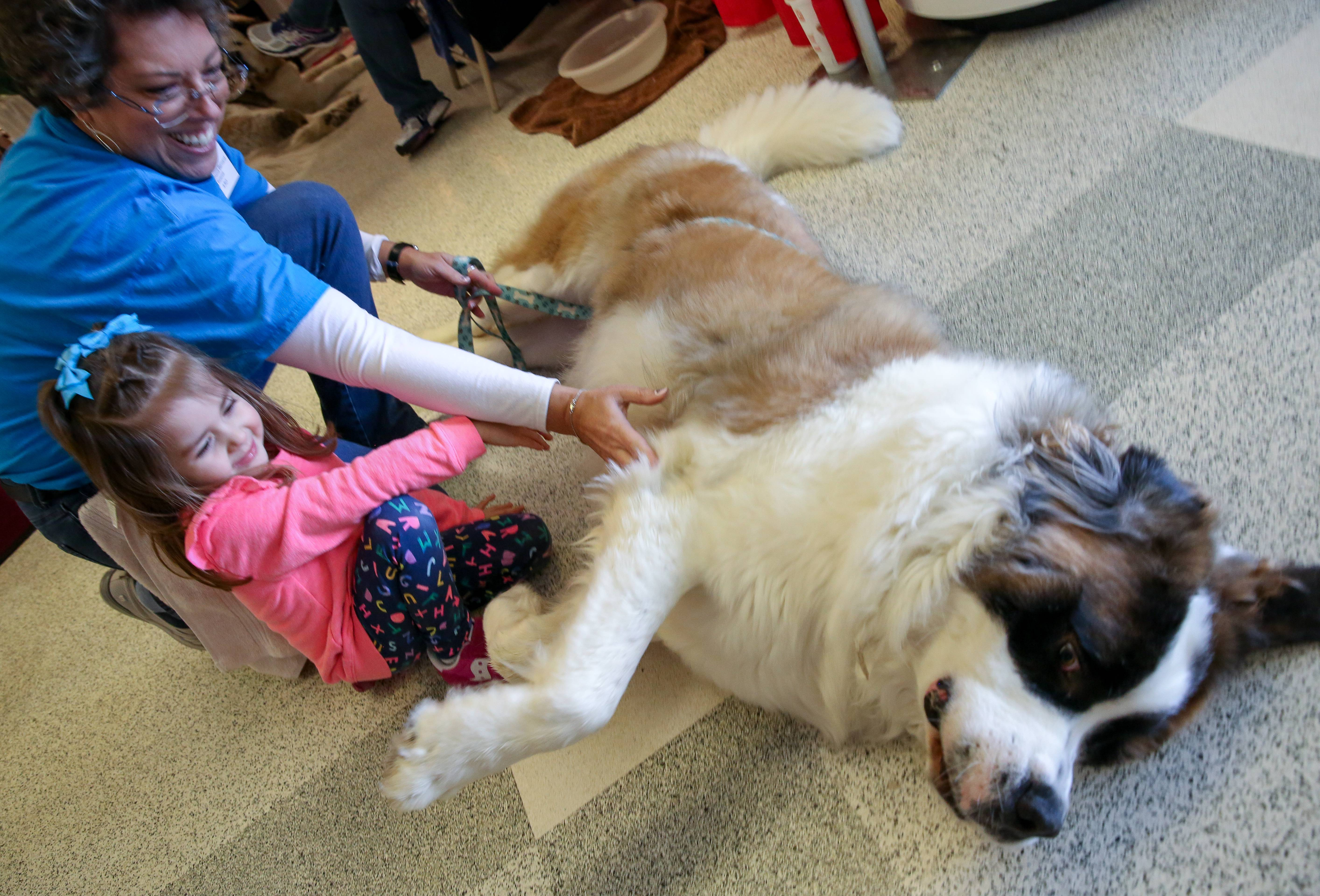 Lorrie Rockey, left, with Illinois Saint Bernard Rescue, shows Meleah Oliver, 3, of Addison, Walter, a 14-month-old Saint Bernard at Chicagoland Family Pet Expo at Arlington Park in Arlington Heights on Friday.