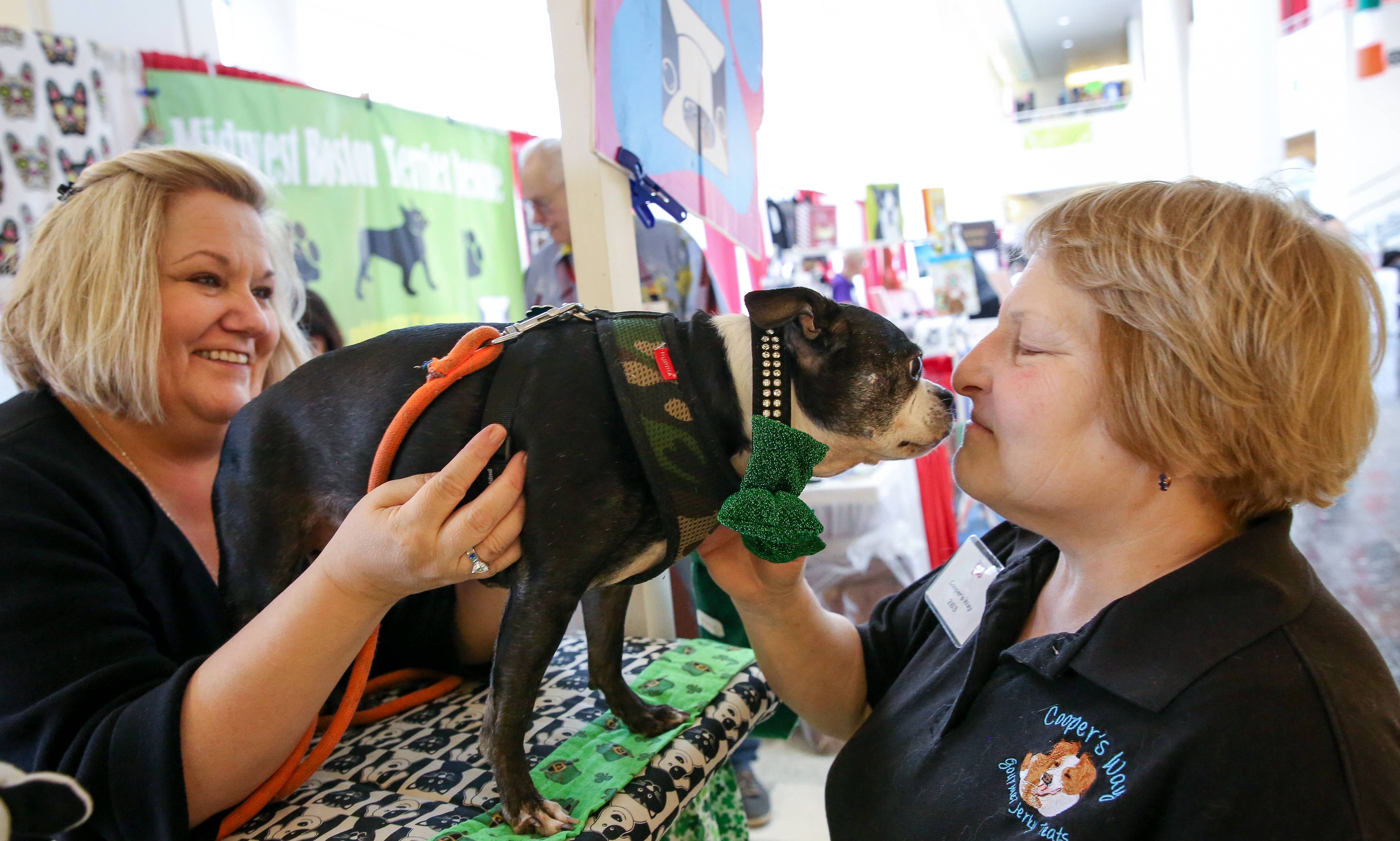Cheryl Cmiel holds Boston terrier Santino, 13, as he moves in to kiss Vicky Price, owner of Cooper's Way Gourmet Jerky Treats, at the Chicagoland Family Pet Expo at Arlington Park in Arlington Heights on Friday.