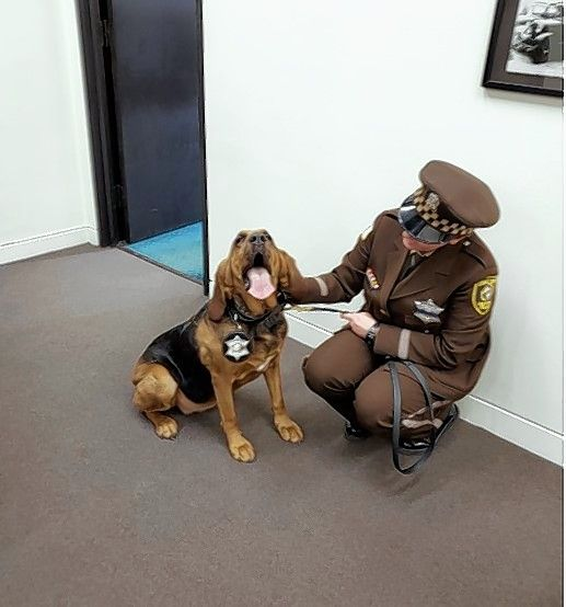 Cook County sheriff's ofice bloodhound Lulabelle and officer Anna Wilk are part of a squad that will track a missing person using scent kits the sheriff's office is providing for free to families, caregivers and social service providers that work with seniors or children who are likely to wander.
